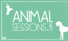 logotip-animal-sessions